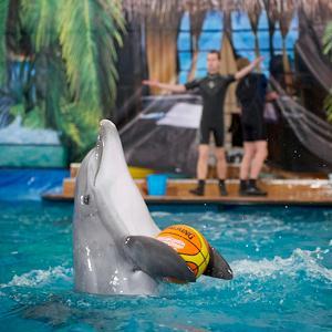 Дельфинарии, океанариумы Томска