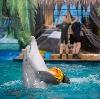 Дельфинарии, океанариумы в Томске